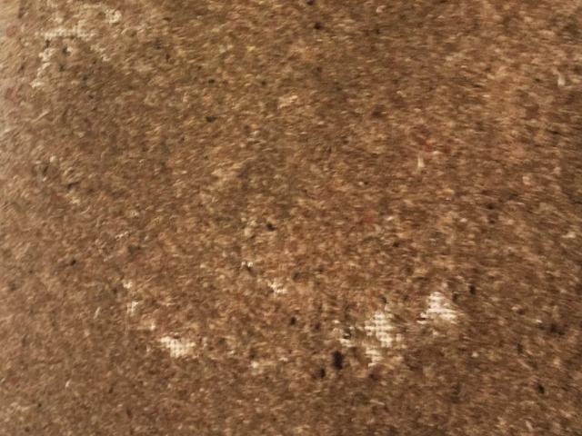 Moth Damage Carpet