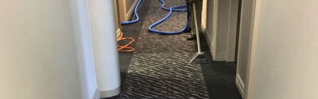 Carpet cleaning by Edinburgh Clean